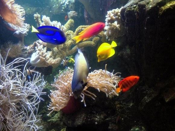 мюнхен аквариум