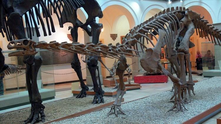 Палеонтологический Музей Мюнхена. Платеозавр по прозвищу «франконский дракон».