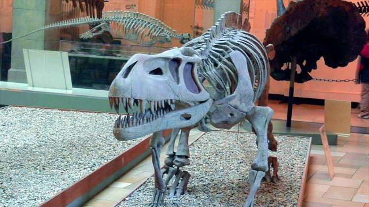 Палеонтологический Музей Мюнхена. Устрашающий оскал престозуха.