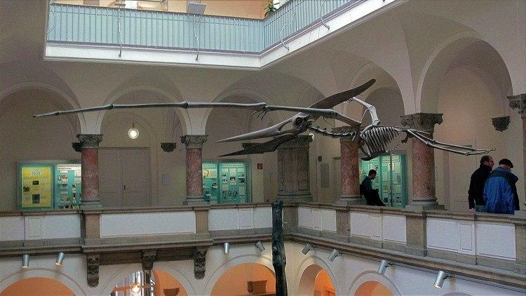 Палеонтологический Музей Мюнхена. Птеродактиль.