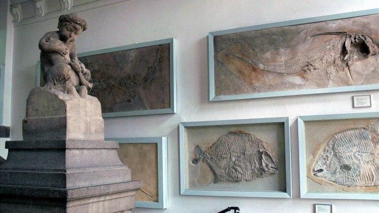 Палеонтологический Музей Мюнхена. Отпечатки древних рыб в плитах известняка.