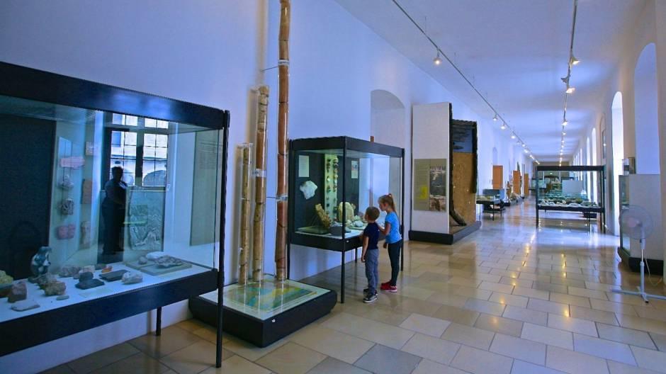 Геологическая коллекция музея замка Нойбурга